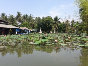 Lotus-Klongs-Bangkok